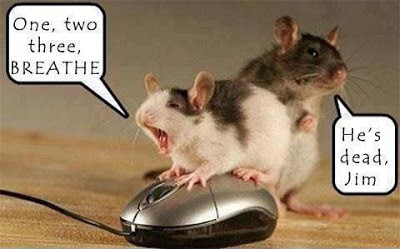 Dead Mouse Funny